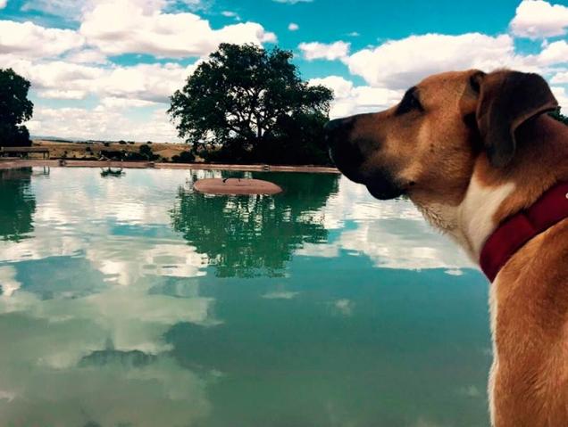 piscina para perros Madrid