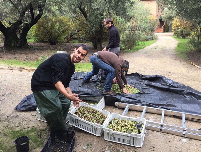 aceite de oliva Madrid