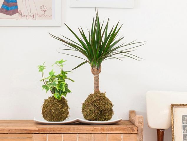 Kokedama, la alternativa japonesa para decorar tu casa con plantas sin maceta